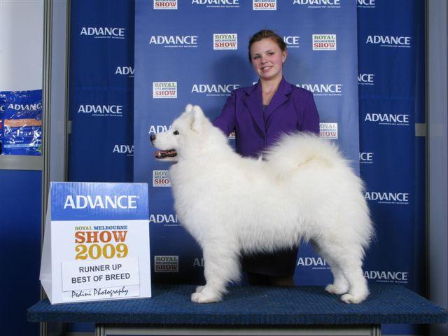 Melbourne Royal Dog Show Results
